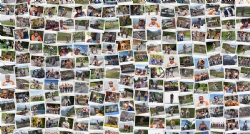 4 jaar Alpe d'HuZes voor team InterXL Processionals - InterXL Internet Services